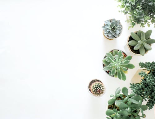House plants facts and trend